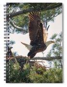 Bald Eagle With Eaglet Spiral Notebook
