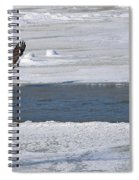 Bald Eagle With Fish 3655 Spiral Notebook