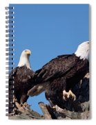 Bald Eagles Quartet Spiral Notebook