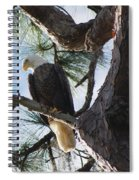 Bald Eagles Eye View Spiral Notebook