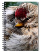 Ball Of Feathers Spiral Notebook