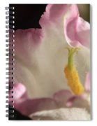 Balloon Flower Spiral Notebook