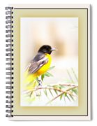 Baltimore Oriole 4348-11 - Bird Spiral Notebook