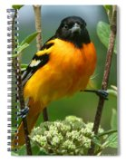 Baltimore Oriole Spiral Notebook