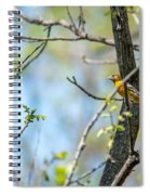 Baltimore Oriole Spiral Notebook