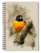 Baltimore Oriole Watercolor Art Spiral Notebook