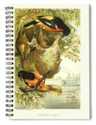 Baltimore Orioles Spiral Notebook