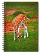 Bambi Spiral Notebook