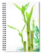 Bamboo Stems And Leaves Spiral Notebook