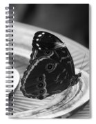 Banana Fly Spiral Notebook