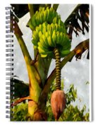 Banana Trees With Fruits And Flower In Lush Tropical Garden Spiral Notebook