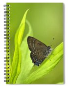 Banded Hairstreak Butterfly Resting On Green Leaf Spiral Notebook