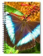 Banded Morpho Butterfly Spiral Notebook