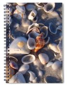 Banded Tulip Spiral Notebook
