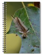 Banded Tussock Moth Caterpillar Spiral Notebook