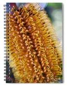 Banksia Flower Spiral Notebook