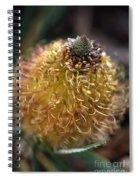 Banksia  Spiral Notebook
