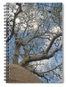 baobab from Madagascar 9 Spiral Notebook