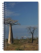 baobab parkway of Madagascar Spiral Notebook