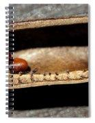 Baptisia Seeds Spiral Notebook