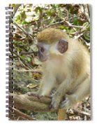 Barbados Green Monkey Spiral Notebook