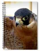 Barbary Falcon Wings Stretched Spiral Notebook