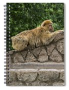 Barbary Macaques Spiral Notebook