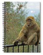 Barbary Macaque  Spiral Notebook
