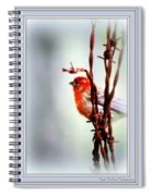 Barbed Wire And Finch Spiral Notebook