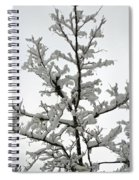 Bare Branches With Snow Spiral Notebook