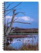 Bare Tree In Marsh Spiral Notebook