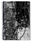 Bark And Trees In Winter Spiral Notebook