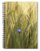 Barley And Corn Flowers In The Field Spiral Notebook