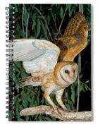 Barn Owl Alights Spiral Notebook