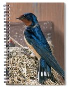 Barn Swallow At Nest Spiral Notebook