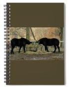 Barnyard Beauties Spiral Notebook