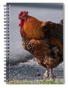 Barnyard Rooster Spiral Notebook