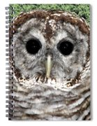 Barred Owl 1 Spiral Notebook