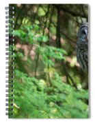 Barred Owl In Forest Spiral Notebook