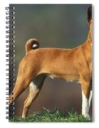 Basenji Dog Spiral Notebook