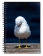 Bashful Seagull  Spiral Notebook