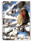 Basking In Winter Light Spiral Notebook