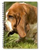 Basset Hound Sniffing Spiral Notebook