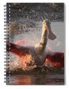 Bath Time - Roseate Spoonbill Spiral Notebook