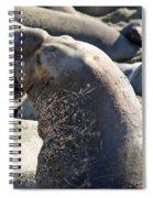 Bull Elephant Seal Battle Scars Spiral Notebook