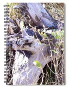 Bayberry And Driftwood Spiral Notebook