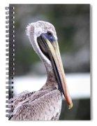 Beach Bum - Pelican Spiral Notebook