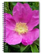 Pink Beach Rose Fully In Bloom Spiral Notebook