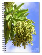 Beach Tree Seed Pods Spiral Notebook