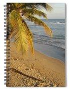 Beach Under Golden Palm Spiral Notebook